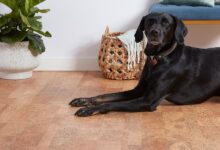 Photo of Best Flooring Option for Your Home If You Have a Pet Dog