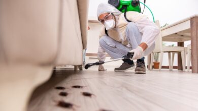 Photo of Reasons You Need to Hire Professional Pest Control Company Rather than DIY